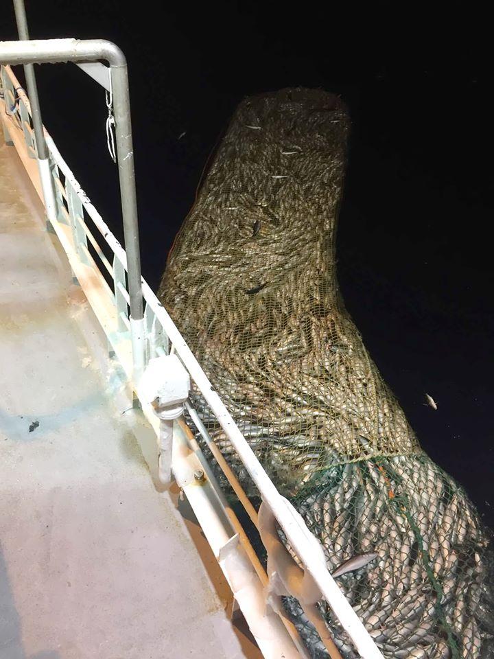 Billedet er fra min klient. Torskene kommer op til overfladen om natten om vinteren, så de fisker om natten. Ja, du lærer meget i en lang proces, også nogle gange ting, som ikke var det, du forventede, da du begav dig ud på eventyret. #torskegilde